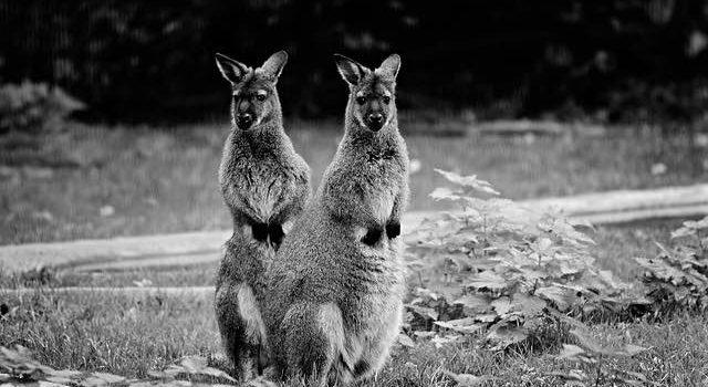 L'Australie à visiter absolument